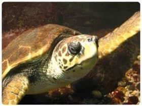 Acquario di alghero for Acquario tartarughe prezzo